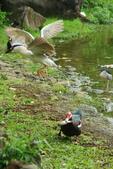 飛鳥練拍~大安森林公園:v 144.JPG