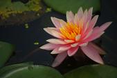 2012與春天有約~台北植物園:1426725648.jpg