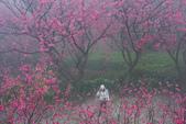 2013陽明山~迷霧朦朧之美:1308565174.jpg