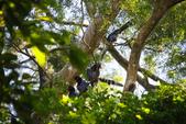 2012 鳥影~ 台灣藍鵲:1975213340.jpg