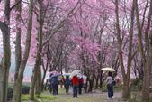 2012武陵農場賞櫻:1837851637.jpg