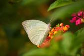 蝴蝶真美麗:1677431235.jpg