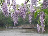 2013紫藤咖啡園:1744203251.jpg