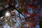 """2013台北植物園~獨領""""楓""""騷:1029877544.jpg"""