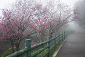2013陽明山~迷霧朦朧之美:1308565151.jpg