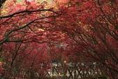98.04賞楓:台北奧萬大.植物園:1173782998.jpg