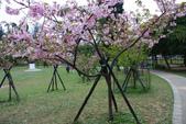 2013新竹麗池之櫻.中正紀念堂梅櫻:1443372243.jpg
