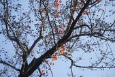 """2013台北植物園~獨領""""楓""""騷:1029877559.jpg"""