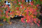 2011福壽山農場~楓景變裝秀:1051285052.jpg