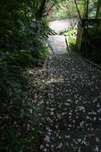 2012共桐賞花:大山背客家人文生態館:1273974710.jpg