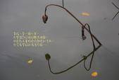 2012留得殘荷聽雨聲:1015070237.jpg