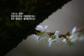 2012南投信義鄉賞梅~烏松崙:1335893243.jpg