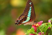 蝴蝶真美麗:1677431236.jpg