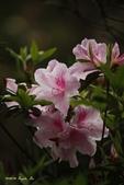 9803花兒寫真:1470786629.jpg