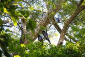 2012 鳥影~ 台灣藍鵲:1975213341.jpg