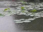 珠兒愛拍:水生植物:荷葉10