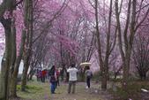 2012武陵農場賞櫻:1837851638.jpg