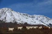 北疆金秋(3)喀納斯湖、禾木村:IMG_4807.JPG