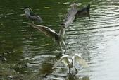 飛鳥練拍~大安森林公園:v 017.JPG