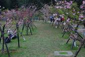 2013新竹麗池之櫻.中正紀念堂梅櫻:1443372245.jpg