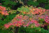 2011福壽山農場~楓景變裝秀:1051285053.jpg