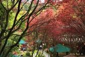 98.04賞楓:台北奧萬大.植物園:1173782999.jpg