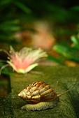 珠兒愛拍:低矮灌木:IMG_8565.jpg