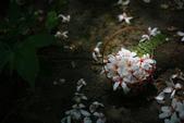 2012共桐賞花:大山背客家人文生態館:1273981882.jpg