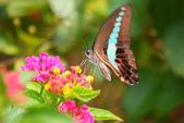 蝴蝶真美麗:1677431237.jpg