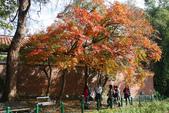 """2013台北植物園~獨領""""楓""""騷:1029877530.jpg"""