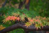 2011福壽山農場~楓景變裝秀:1051285054.jpg