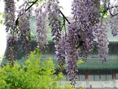 2013紫藤咖啡園:1744203252.jpg