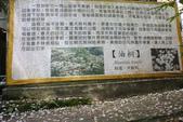 2012共桐賞花:大山背客家人文生態館:1273974711.jpg