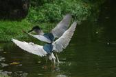 飛鳥練拍~大安森林公園:v 067.JPG
