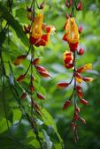 2012與春天有約~台北植物園:1426725650.jpg