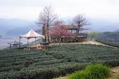2012武陵農場賞櫻:1837845746.jpg