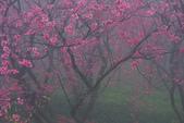 2013陽明山~迷霧朦朧之美:1308565176.jpg