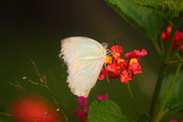 蝴蝶真美麗:1677431238.jpg