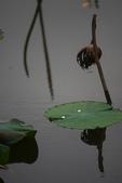 2012留得殘荷聽雨聲:1015061809.jpg