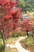 98.04賞楓:台北奧萬大.植物園:1173783000.jpg