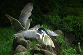 飛鳥練拍~大安森林公園:v 078.JPG