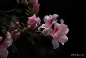 9803花兒寫真:1470786631.jpg