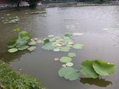 珠兒愛拍:水生植物:荷葉9