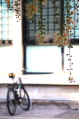 2018穗花棋盤腳:IMG_4242.JPG