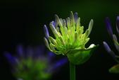 2013與繡球花的美麗約會:1235902636.jpg