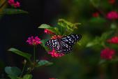 蝴蝶真美麗:1677431239.jpg