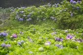 2012繡球花.阿勃勒.:1603080165.jpg
