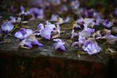 2013紫藤咖啡園:1744197445.jpg