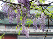 2013紫藤咖啡園:1744203253.jpg