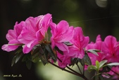 9803花兒寫真:1470786632.jpg